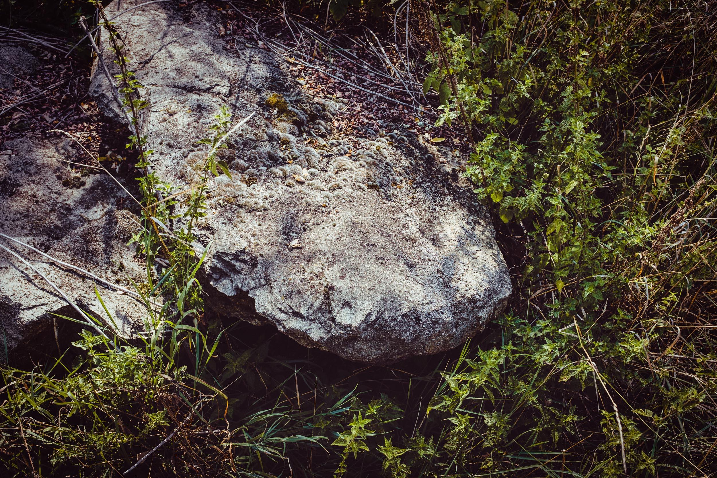 Steine und Pflanzen